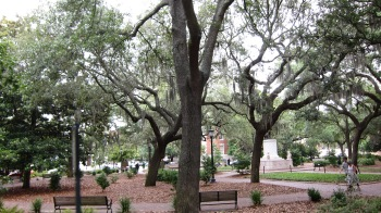 Savannah oaks - Copy