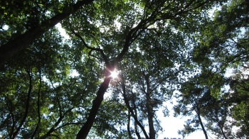Arboritum