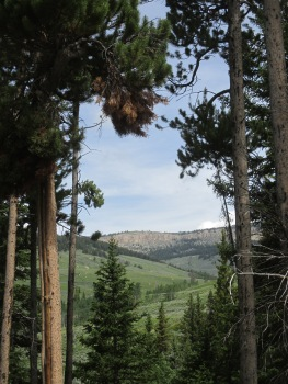 Overlooking Big Horn National Forest
