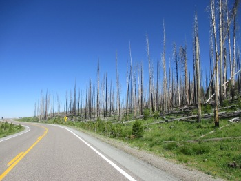 The impact of the forest fire that devastated Yellowstone Park in 1988 can still be seen today.  Please be careful in the forests!