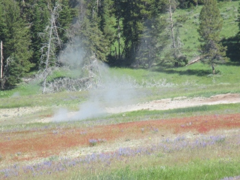 Geothermal activity can be found throughout the park with many geysers throughout the basin
