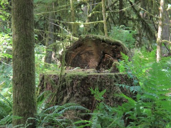 Cathedral Grove, west of Qualicum Beach on Highway 4